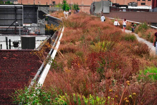 Fall foliage at the High Line Park.